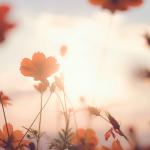 Suicídio: Como refletir e superar a perda?